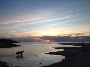 Hotel Gjerrild Kro, overnatning, hund, Gjerrild Nordstrand